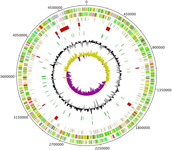 New page 1 genewiz center for biological sequence analysis danish technical university produces linear or circular genome altases such as the one below ccuart Image collections